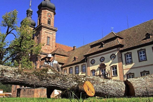 Kirche lässt kranke Linde im Klosterhof fällen
