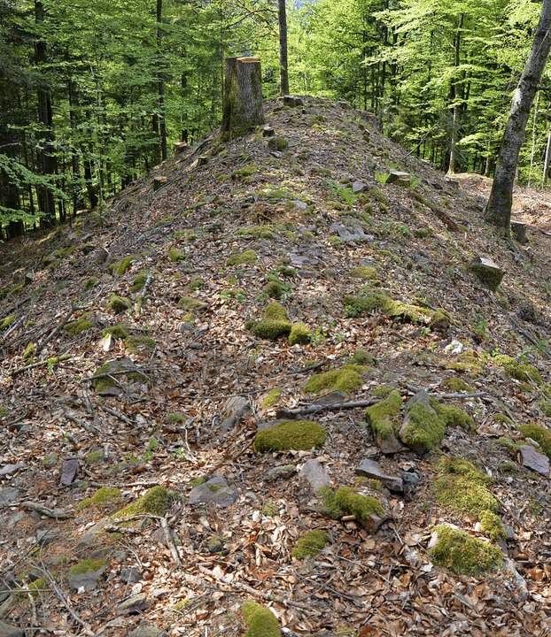 Nachdem die Bäume entfernt wurden, ist...krone des Walls Richtung Schwarzatal.     Foto: Friedbert Zapf