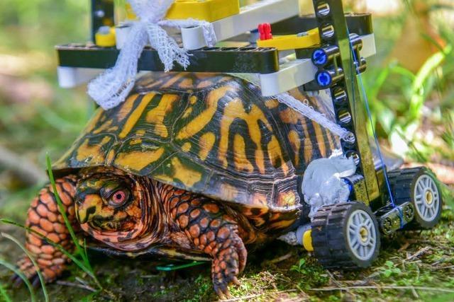 Rollstuhl für Schildkröte