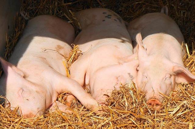 Weidefest in Gersbach für die Tuchfühlung mit Tier, Handwerk und Direktvermarktung