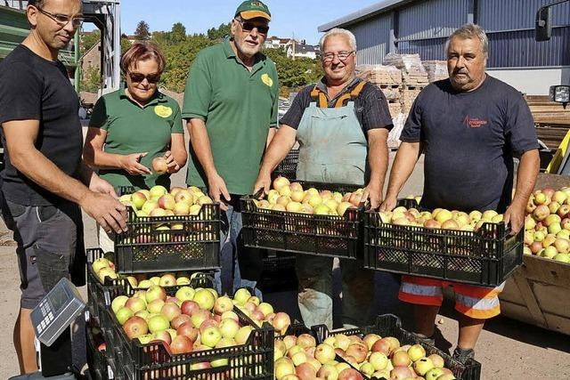 16 Tonnen heimische Äpfel