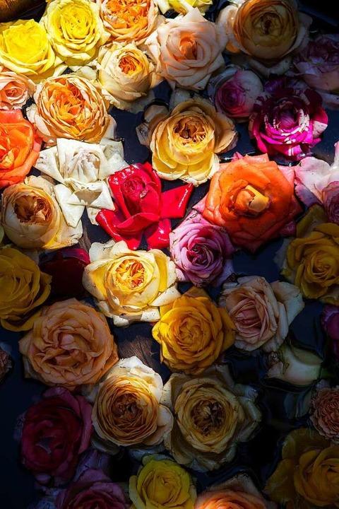 Rosen vom Rosenhof in Bahlingen: Marce... dem Hof inmitten des Ortes verkauft.   | Foto: Joss Andres