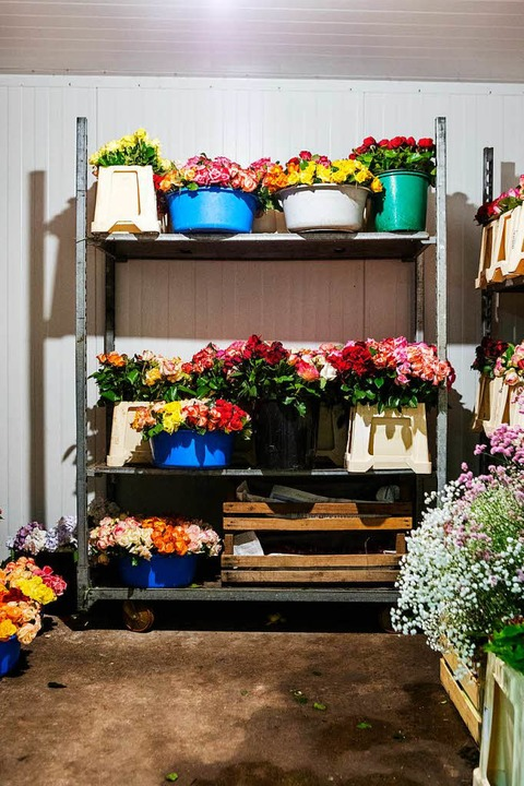 Floristik im Rosenhof: Rosen warten auf Kunden.   | Foto: Joss Andres