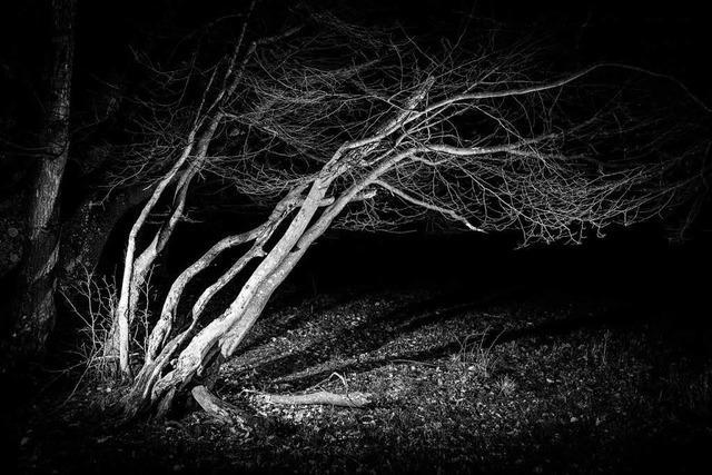 Wie es ist, nachts allein im Wald zu übernachten