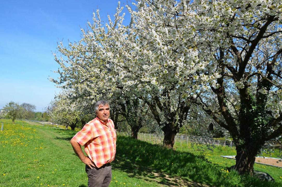 Kirschblüte im Obstparadies  | Foto: Gabriele Hennicke