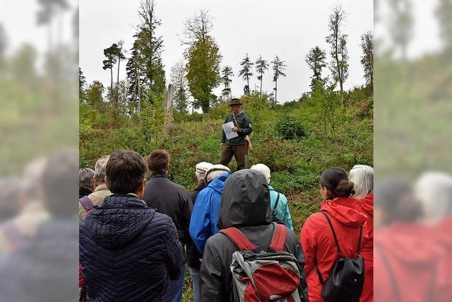 50 Wanderer beim 50. Waldtag dabei