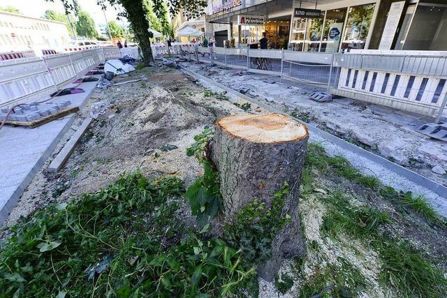 Wer in Freiburg unerlaubt Bäume fällt, soll höhere Strafen zahlen