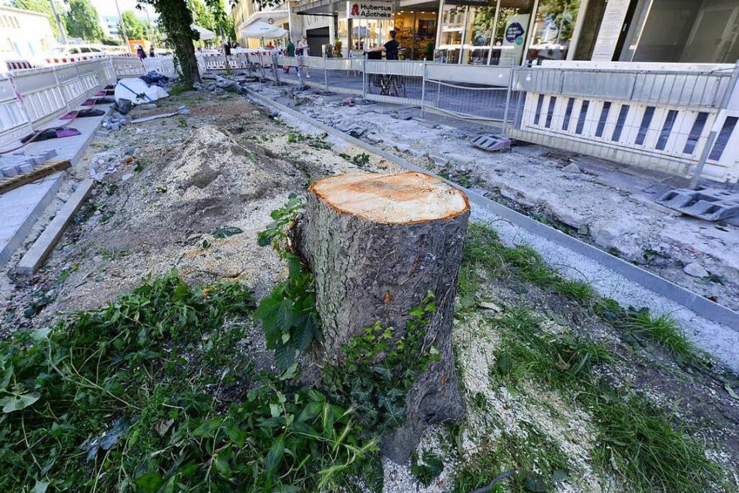 Über jeden zu fällenden Baum werde in ...und Tiefbauamtsleiter Frank Uekermann.  | Foto: Ingo Schneider