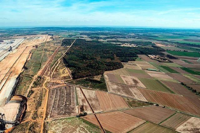 OVG Münster stoppt Rodung im Hambacher Forst