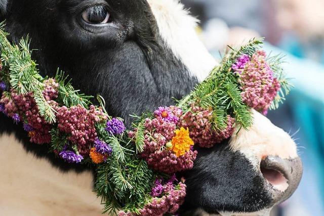 Hocks und Feste am Wochenende im Breisgau