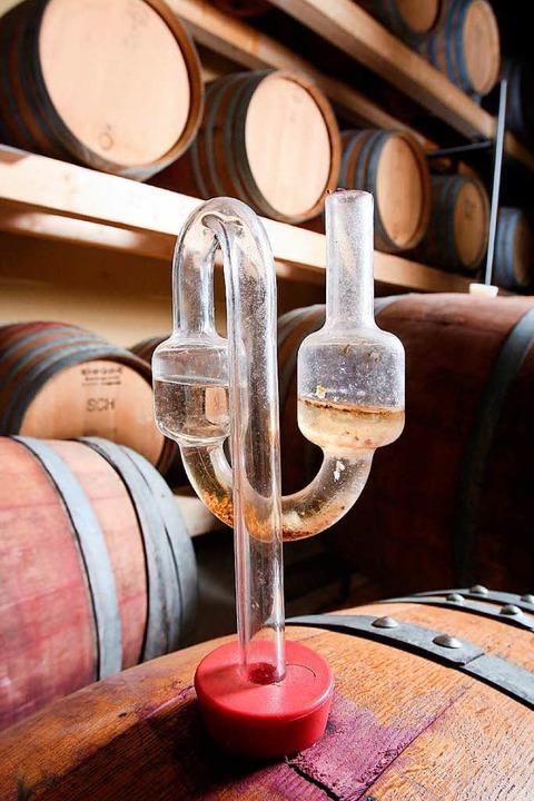 In den Holzfässern reifen viele gute Weine heran.  | Foto: dpa