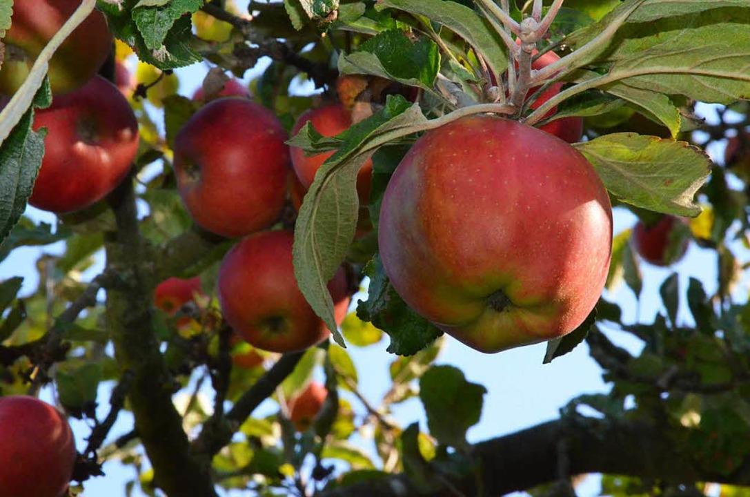Äpfel  | Foto: Gabriele Hennicke