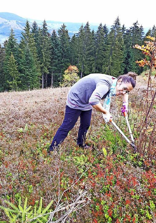 Reporterin Isabell Bickel fasst  mit an bei der Landschaftspflege.  | Foto: Isabell Bickel