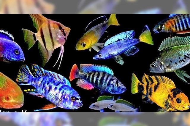 Bunte Vielfalt in den Aquarien der Fisch-Börse in Freiburg-St.Georgen
