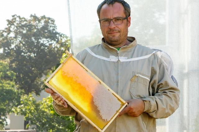 Imker Roland Kälble weiß, warum Bienen für die Stadt schwärmen