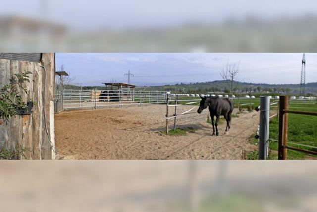 Pferdeauslaufplatz ist nur geduldet