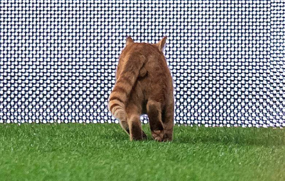 Leider kommt es immer wieder vor, dass Katzen angeschossen werden.  | Foto: dpa