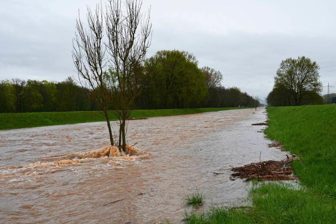 Die Dreisam bei Hochwasser im Juni 2016  | Foto: Manfred Frietsch