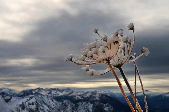 Warum ist Frost so gefährlich für Pflanzen?