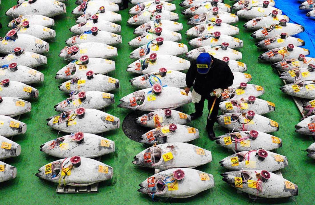 Viel Fisch, wenig Atmosphäre: Tokios neuer Fischmarkt hat viele Kritiker.   | Foto: dpa