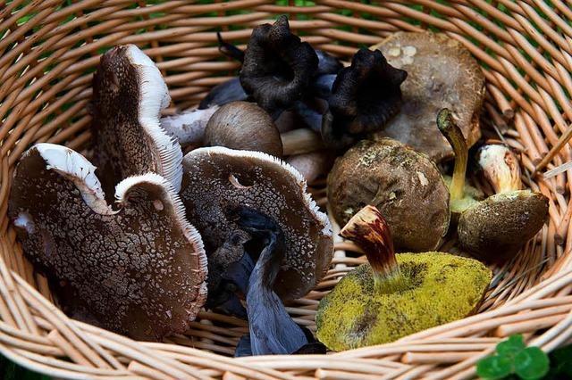 Schlägerei wegen Pilzen bei Tegernau
