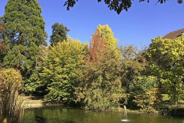 Goldener Oktober im Stadtgarten