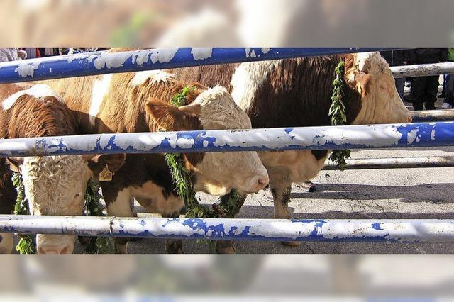 Vier Hage und 15 Jagdhornbläser bringen Gewicht auf die Waage
