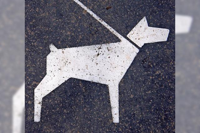 Hund muss ins Tierheim