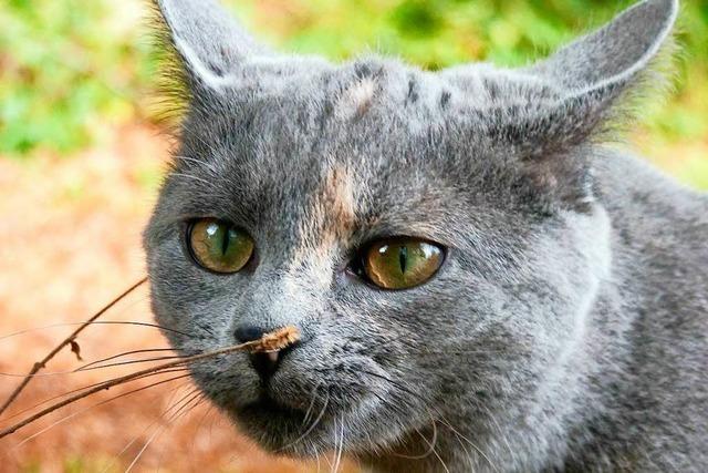 Steinen: Kurioser Einsatz um verschwundene Katze
