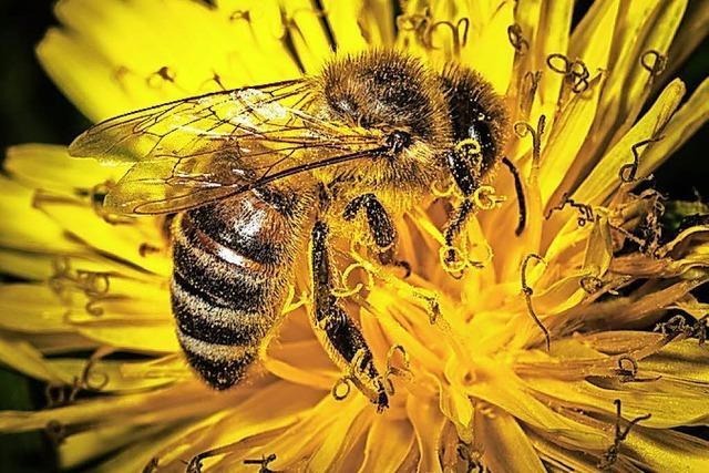 Bienenfreundlich Gärten gestalten