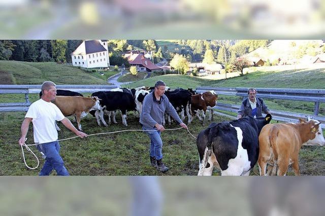 Die letzte Kuh ist von der Weide