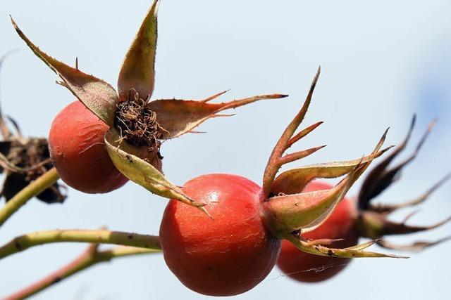 Kugelige Früchte