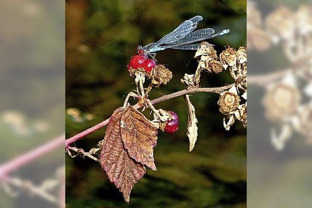 Lebensraum für Libellen
