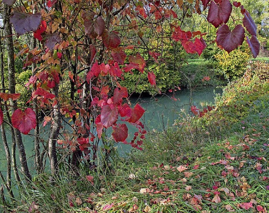 Die stille Auenlandschaft der Petite C... besonderes Naturerlebnis versprechen.    Foto: Jutta Schütz
