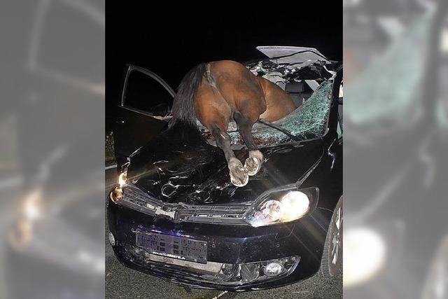 Pferd kracht durch die Windschutzscheibe