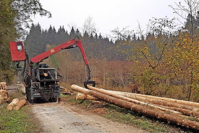 Über 42 000 Festmeter Holz eingekauft