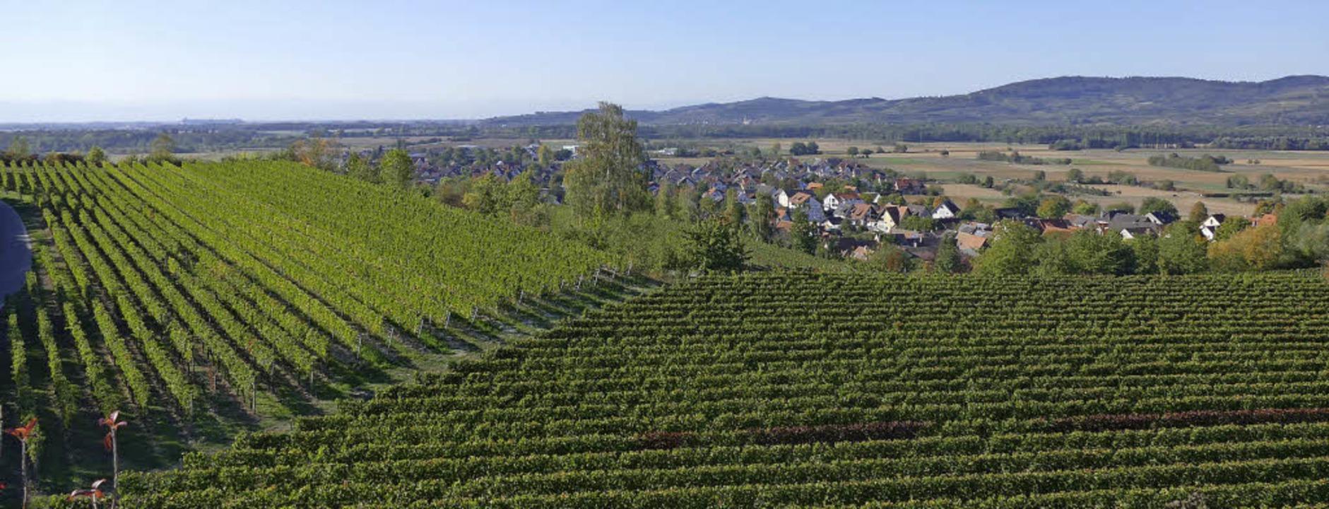 Herrliche Aussicht vom Tuniberg:  Wein... Kaiserstuhl und dazwischen  Merdingen  | Foto: F. Dölling