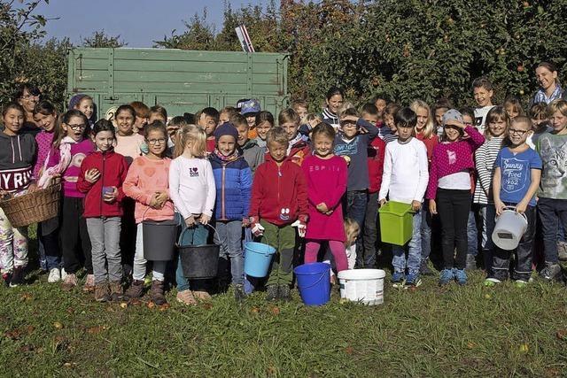 Äpfel für 1000 Liter Apfelsaft