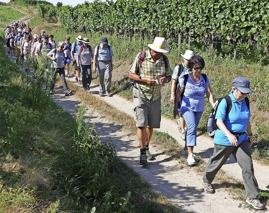 BZ-Wanderungen mit dem Schwarzwaldverein sind beliebt.    | Foto: Zink