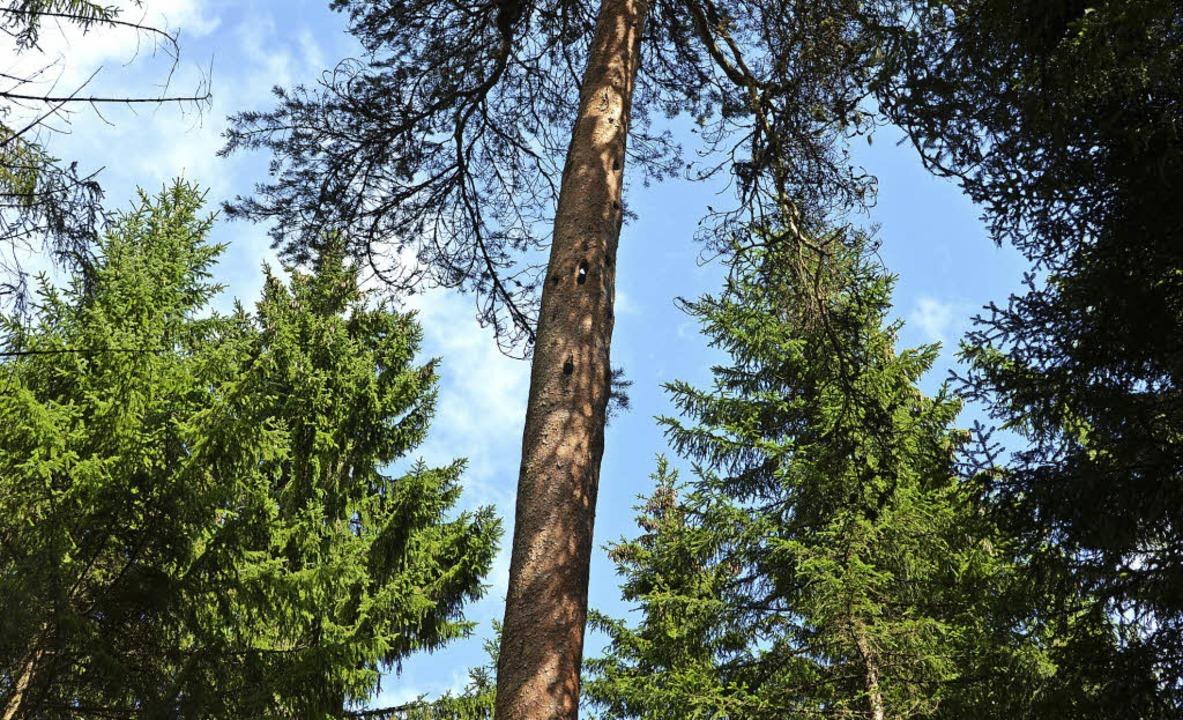 Nachwirkungen des Sturmtiefs Burglind .... Zudem bereitet Käferholz   Probleme.  | Foto: Juliane Kühnemund