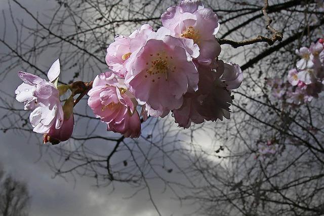 Frühling im Oktober