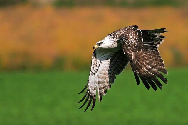 Toter Vogel entfacht neuen Streit um die Windkraftanlagen bei Gersbach