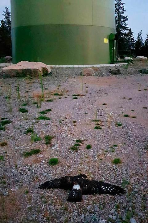 Der tote Wespenbussard, fotografiert a...Fundstelle unweit der Windkraftanlage.  | Foto: Privat