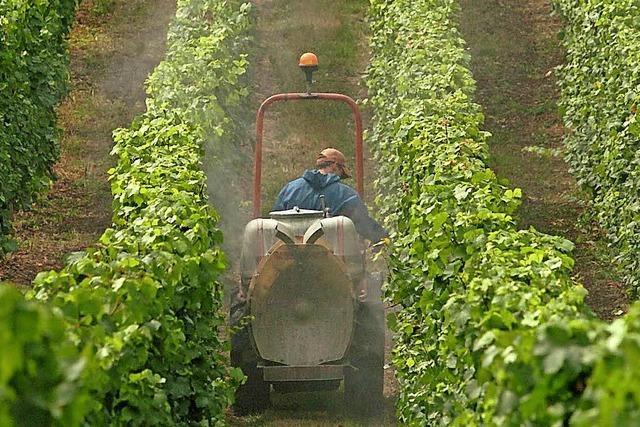 Experten schenken reinen Wein ein