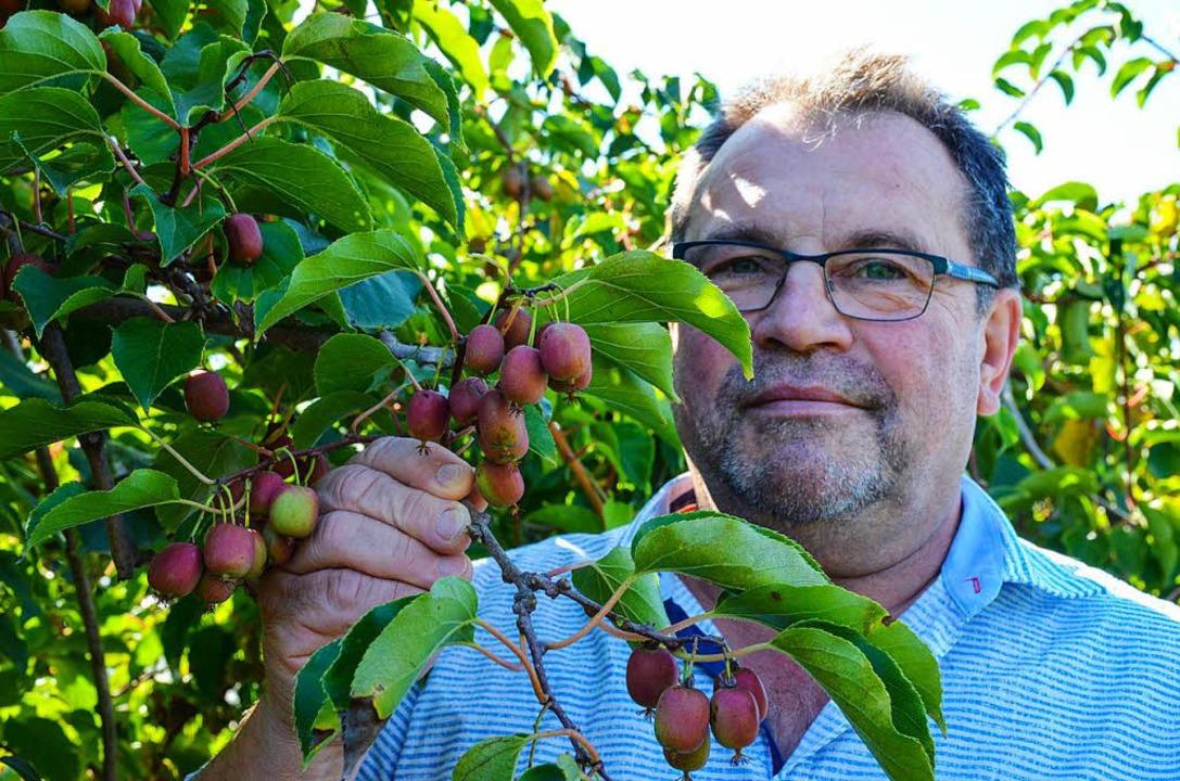 Landwirt Janek Michalski baut Minikiwi an.   | Foto: Gabriele Hennicke