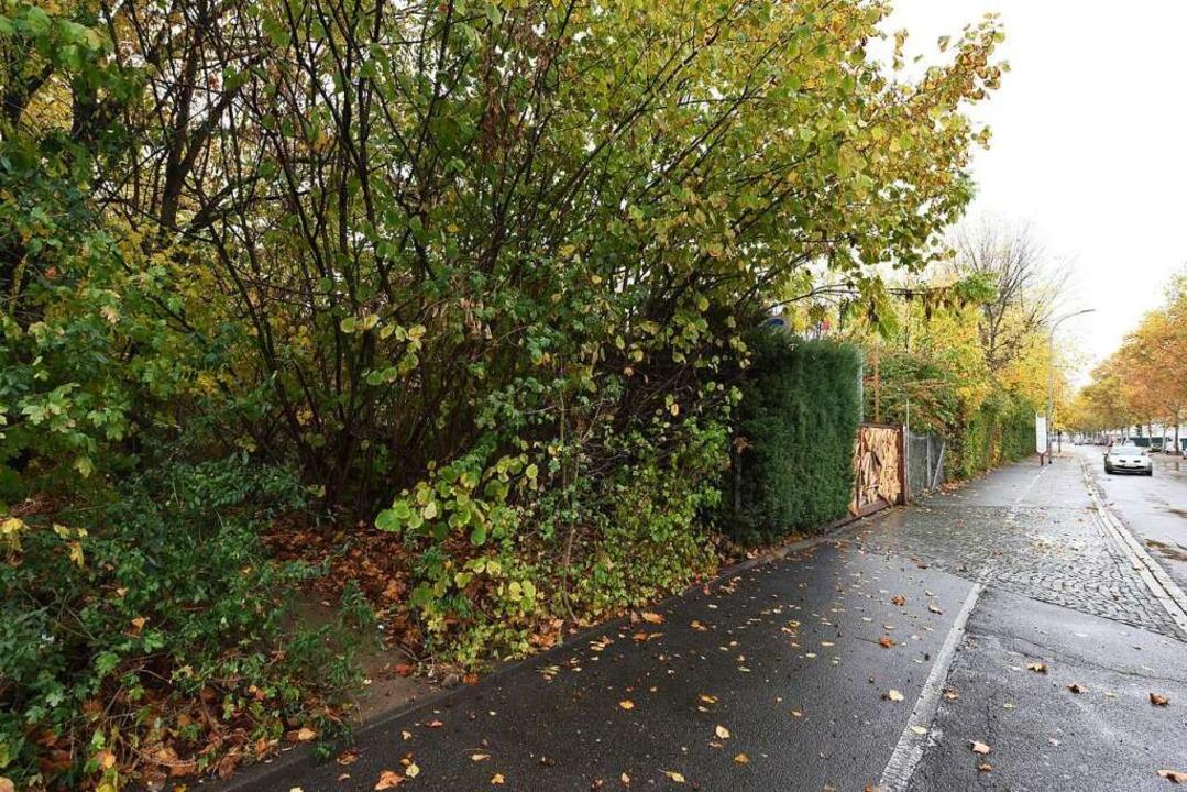 Durch das mit Holz verkleidete Tor gel...iegt im kleinen Waldstück links davor.  | Foto: Rita Eggstein