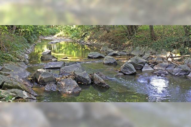 Die Kander wird gewässerökologisch untersucht