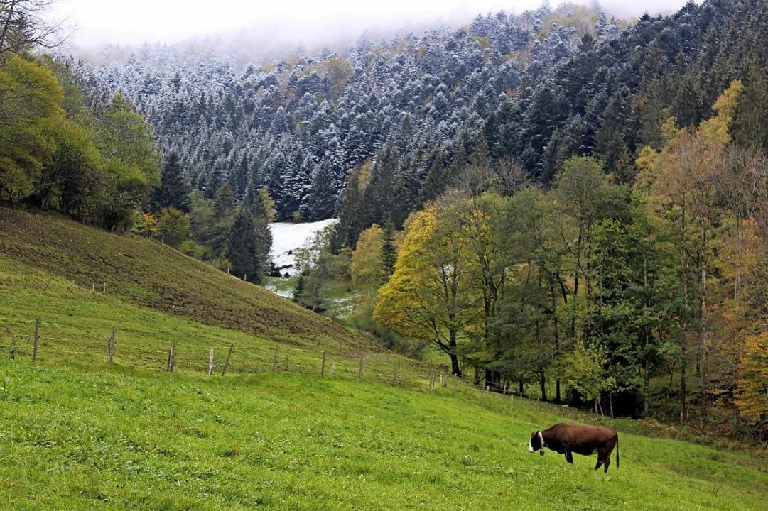 Das Gras schmeckt langsam ziemlich coo...cher Hinterzinken vorgestern,  Montag.  | Foto: Bernd Fackler