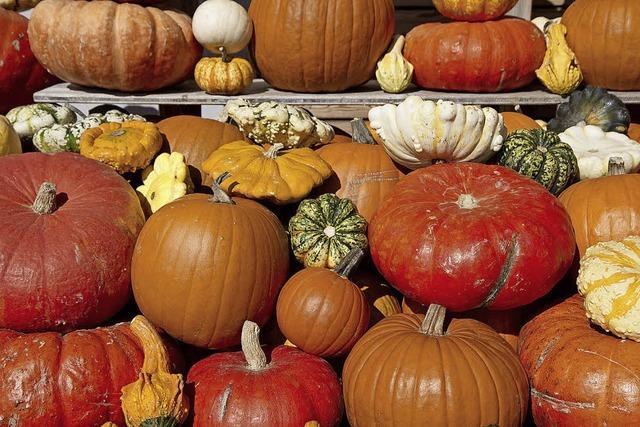 Das sind die Freuden des Herbstes