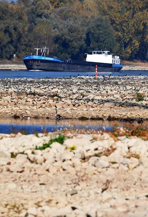 Niedrigwasser am Rhein    Foto: dpa